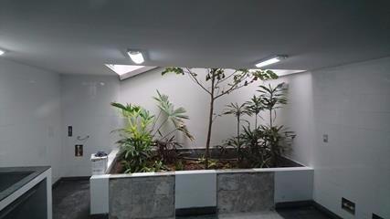 jardin interior pozo de luz